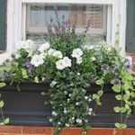 I love my window boxes!